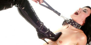 Dominanz und Submission